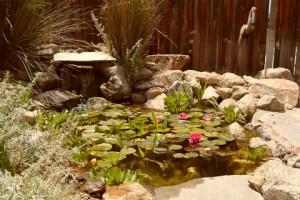 Pond side find