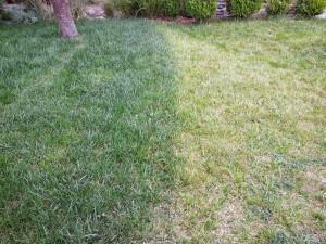 May 2014 Garden Update