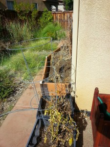 September Garden Update