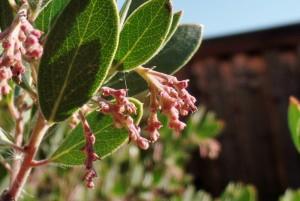December 2015 California Native Plants Photos