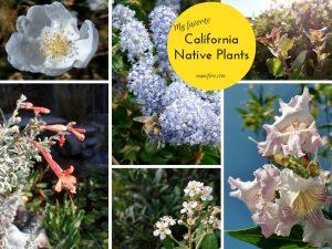 Photos of My Favorite California Native Plants
