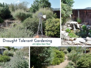 Drought Tolerant Gardening with California Native Plants: having a water wise garden doesn't have to be rocks and cacti.