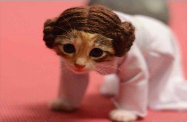 kitty-costumes-star-wars-adorable-princess-leia