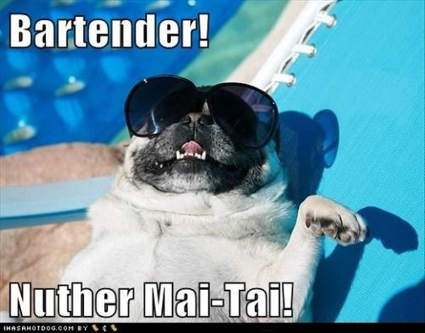 2-pug-dog-on-vacation