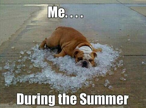 These Summer Dog memes may not cool you off, but the should make you laugh.#summer #humor #dogs