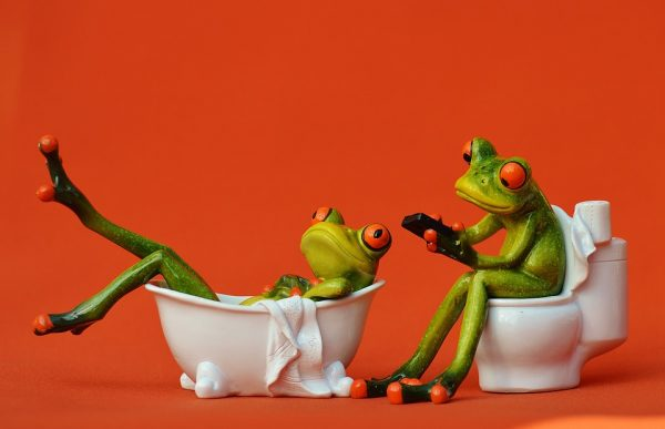 frogs in the bathroom
