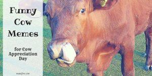 Funny Cow Memes plus Friday Frivolity Blog Party