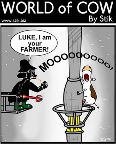 funny-world-of-cow