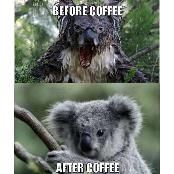 koala-before-coffee-after-coffee