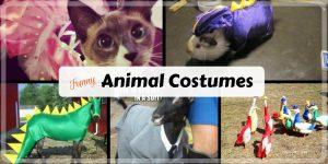 Crazy Pet Costumes plus Friday Frivolity