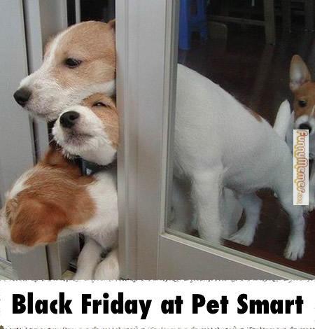 black-friday-meme-005-at-pet-smart