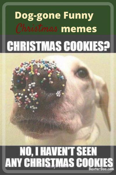 dog gone funny christmas memes dog puns christmas puns