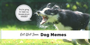 Memes to Make You Smile When You are Sick as a Dog (Friday Frivolity)