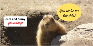 A Little Dose of Happy with Cute and Funny Groundhog Memes (Friday Frivolity)