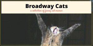 Broadway Musical Cat Memes plus Friday Frivolity