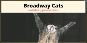 Broadway Musical Cat Memes plus Friday Frivolity