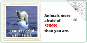 Funny Animals More Afraid of Spiders than You Are