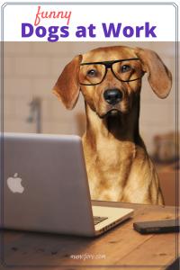 Dogs at Work Memes #FridayFrivolity