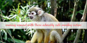 Monkey Around with these cute monkey videos.