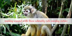Monkey Around with these Cute Monkey Videos on Friday Frivolity