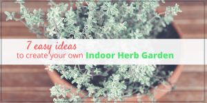 7 Easy Ideas to Create Your Own Indoor Herb Garden