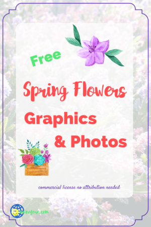 "California lilac photo with text overlay ""Free SPring Flowers Graphics and Photos"""