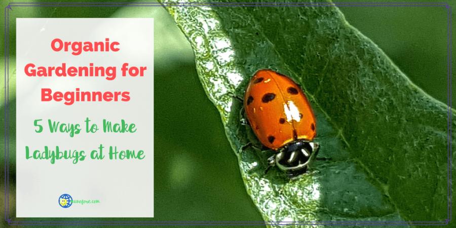 Organic Gardening for Beginners: 5 Ways to Make Ladybugs at Home