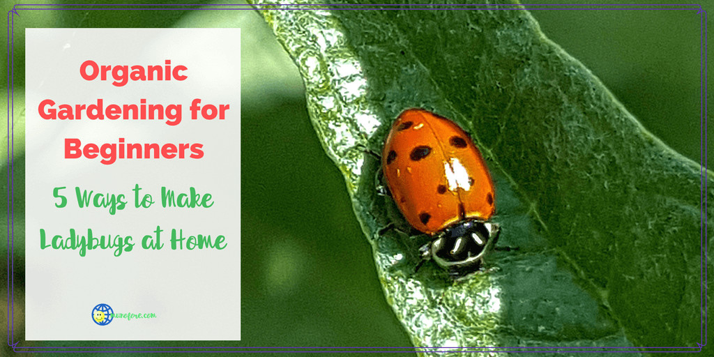 "lady bug crawling on a leaf with text overlay ""Ways to Make Ladybugs at Home"""