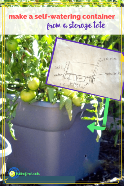 self watering container with large tomato plant growing in it